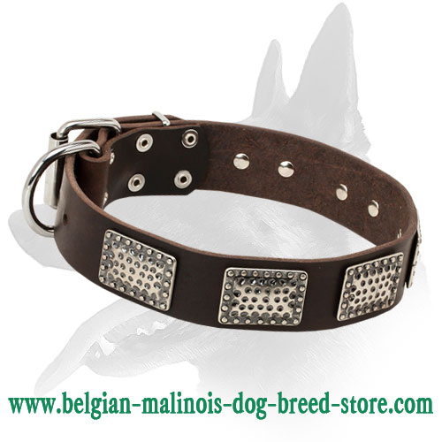 Super Stylish War Leather Dog Collar for Belgian Malinois