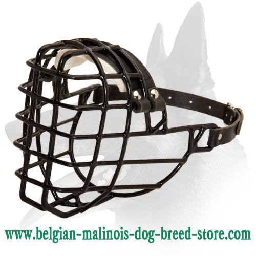 Wire Muzzle with black rubber cover for Belgian Malinois