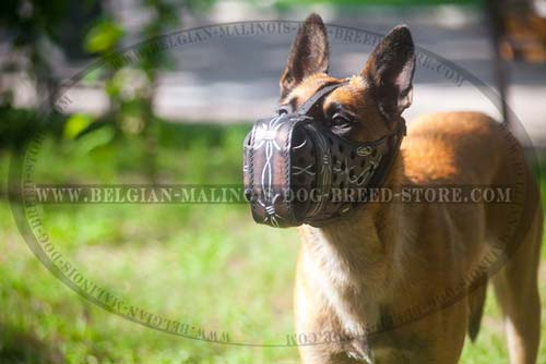 Comfy Leather Muzzle for Belgian Malinois