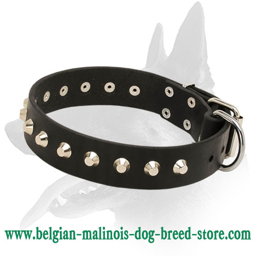 """Daily Elegance"" Leather Dog Collar with Nickel-Plated Pyramids for Belgian Malinois"
