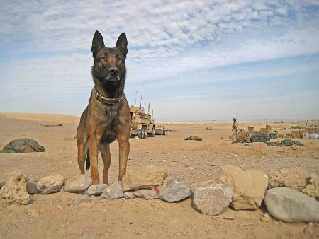 Soldier Dog Lex