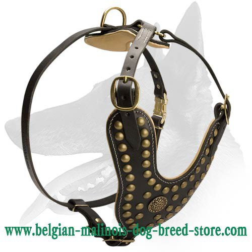 Exclusive Design Studded Leather Harness for Belgian Malinois