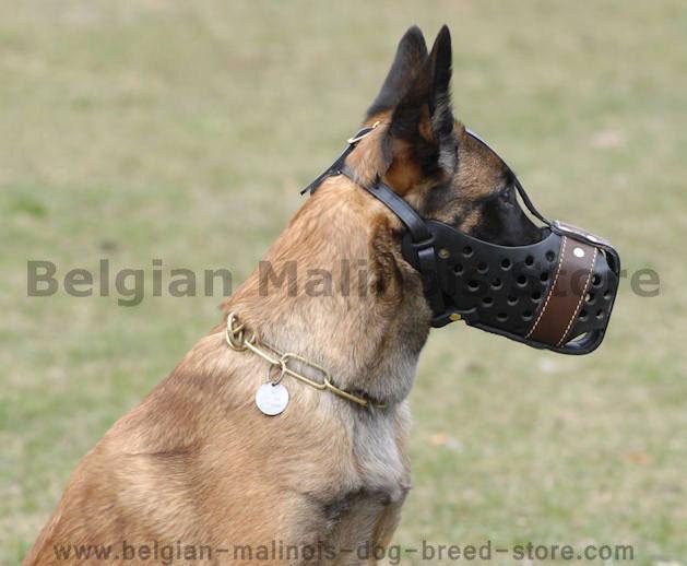Leather Training Muzzle for Belgian Malinois