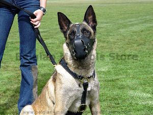 Luxury Handcrafted Leather Harness for Belgian Malinois