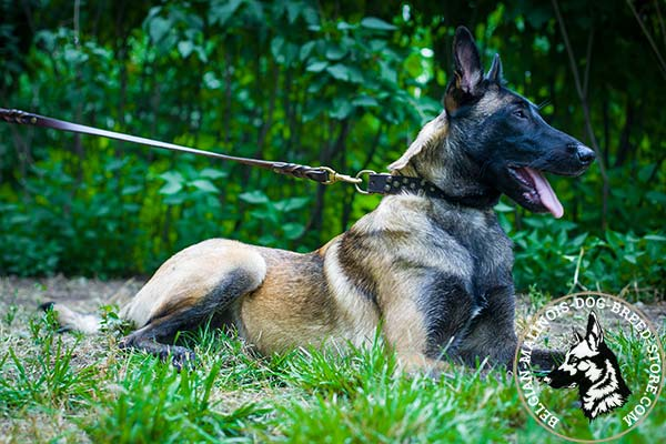 Belgian Malinois leather leash with strong brass plated hardware for any activity