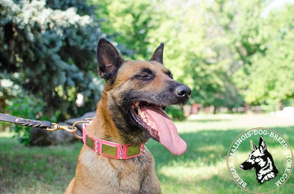 Belgian Malinois leather leash of braided design with brass plated hardware for quality control