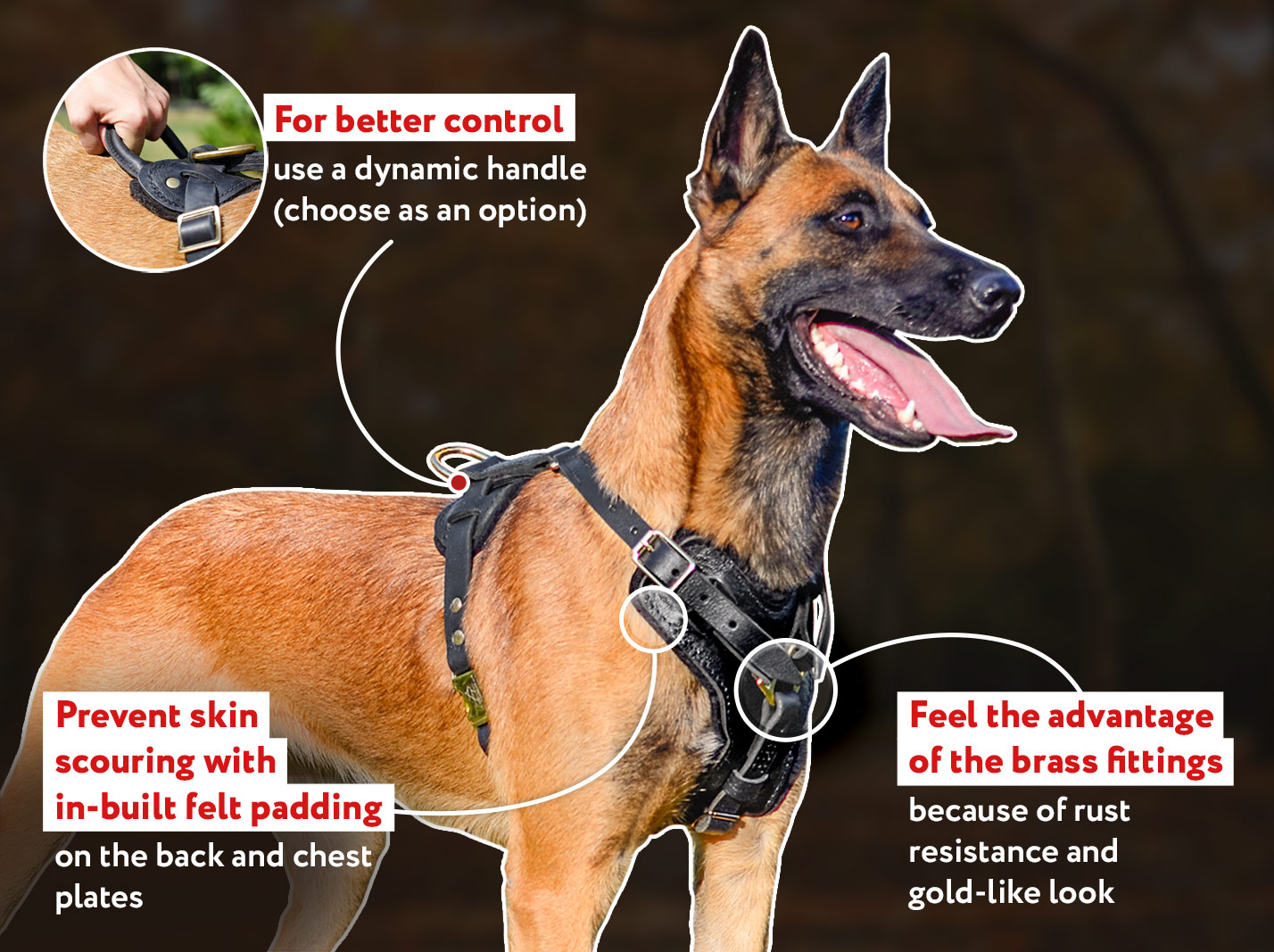 Exclusive Luxury Handcrafted Leather Harness for Belgian Malinois
