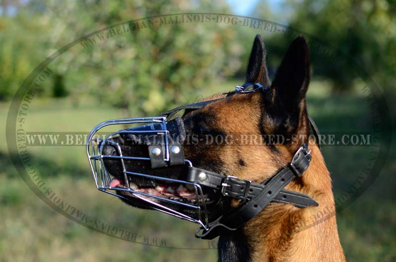 Walking Malinois Muzzle. Durable Belgian Malinois Muzzle