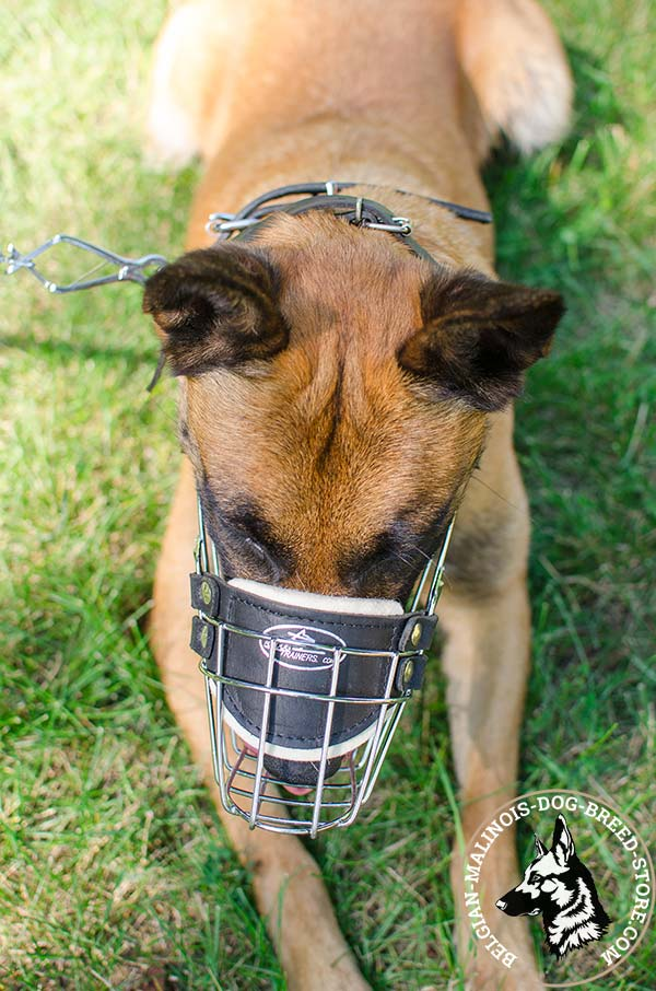 Belgian Malinois wire basket muzzle with nose padding with traditional buckle for any activity