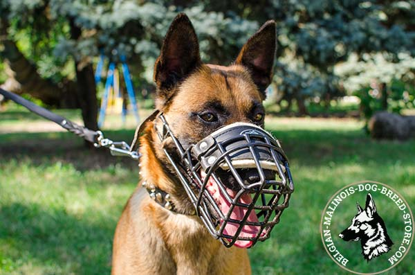 Belgian Malinois wire basket muzzle for air circulation with traditional buckle for quality control