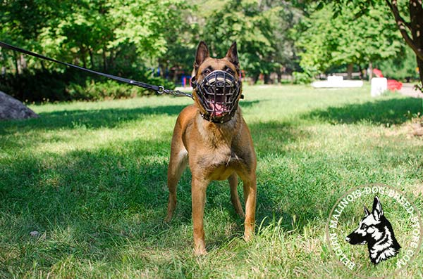 Belgian Malinois wire cage muzzle free breathing with nickel plated hardware for safe walking