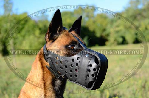 Malinois Leather Muzzle