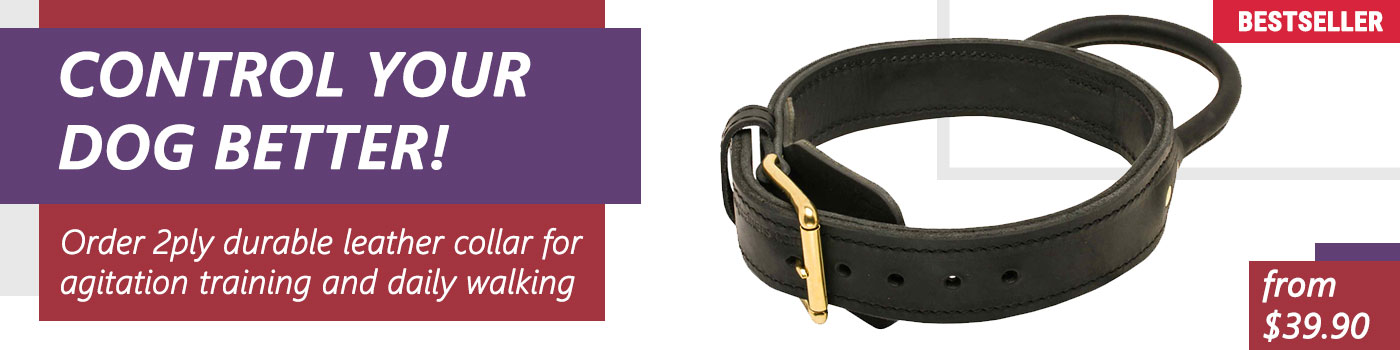Professional Leather Collar With Handle For Agitation Work